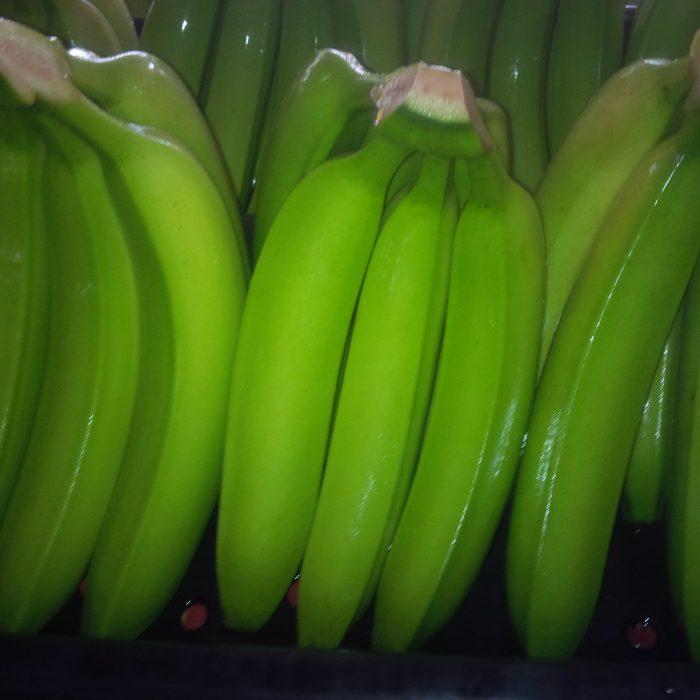 Banano Uraba Negocios 5